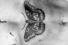 Тату : Бабочка на животе
