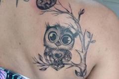 Тату : Птицы, Сова, Луна, Деревья на лопатке