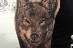 Татуировка : Животные, Рукав, Волк на плече