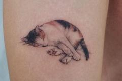 Татуировка : Кошка, Животные, Цветные на предплечье