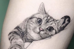 Тату : Кошка, Животные на предплечье
