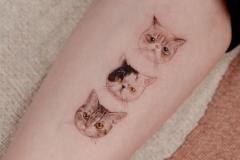 Татуировка : Кошка, Животные на предплечье