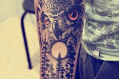 Татуировка : Сова, Птицы, Деревья, Цветные на предплечье