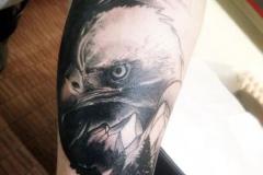 Татуировка : Орел, Птицы, Горы на предплечье