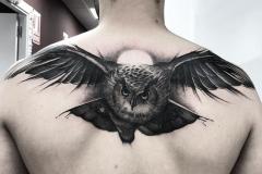 Татуировка : Птицы, Сова на спине