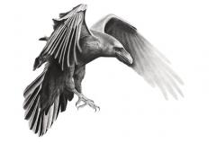 Тату : Ворон, Птицы