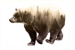 Тату : Животные, Медведь