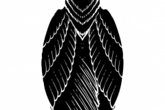 Наколка : Ворон, Птицы