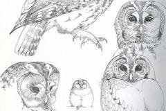 Тату : Птицы, Сова