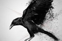 Татуировка : Птицы, Ворон