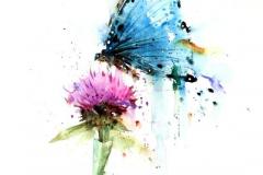 Наколка : Цветы, Цветные, Бабочка