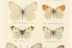 Татуировка : Цветные, Бабочка