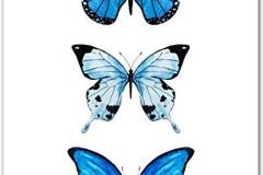 Наколка : Цветные, Бабочка