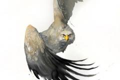 Тату : Птицы, Цветные, Орел - эскиз