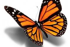 Тату : Цветные, Бабочка