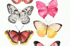 Наколка : Бабочка, Цветные