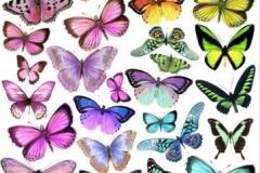Татушка : Цветные, Бабочка