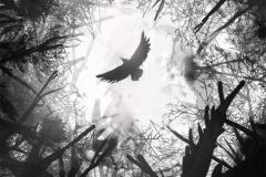 Наколка : Птицы, Ворон