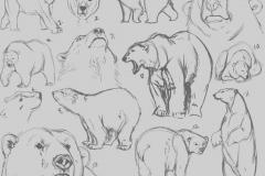 Татуировка : Животные, Медведь
