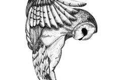 Татуировка : Птицы, Сова